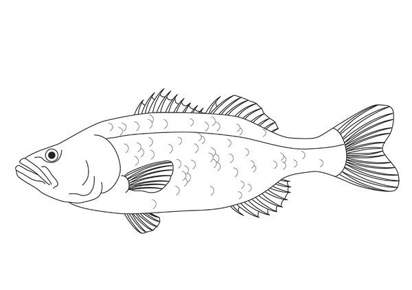 Printables Labeling Of Of A Fish Body thunderbolt kids use your scientific labelling skills to label each animal using the five body structures of animals