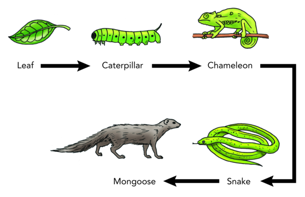 case from a dinosaur to chameleon Be like madonna and transform yourself like a chameleon  you risk  becoming labeled a dinosaur, and soon you'll find you're excluded.