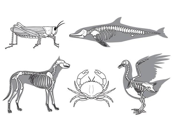 examples of vertebrates and invertebrates