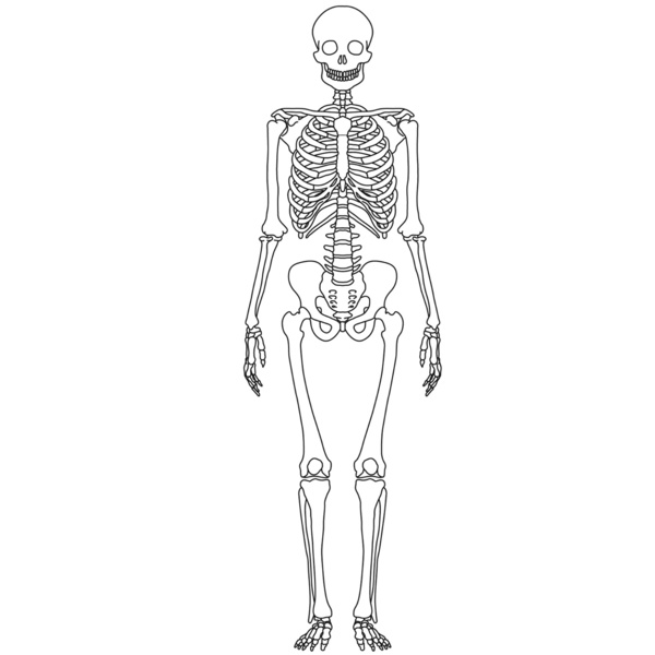Human Skeleton Without Labels Defenderautofo