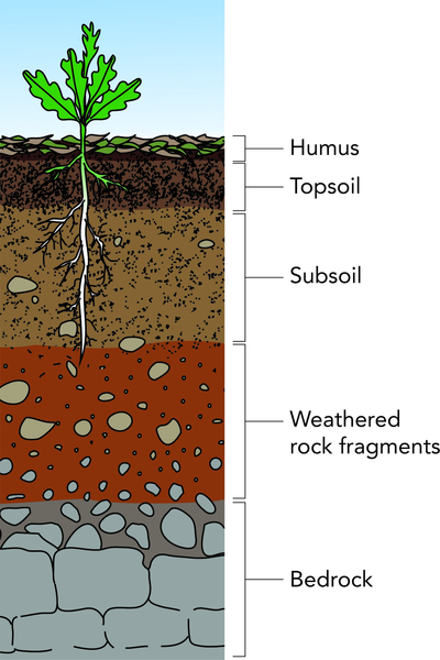 Humus soil layer ideal soil profile has