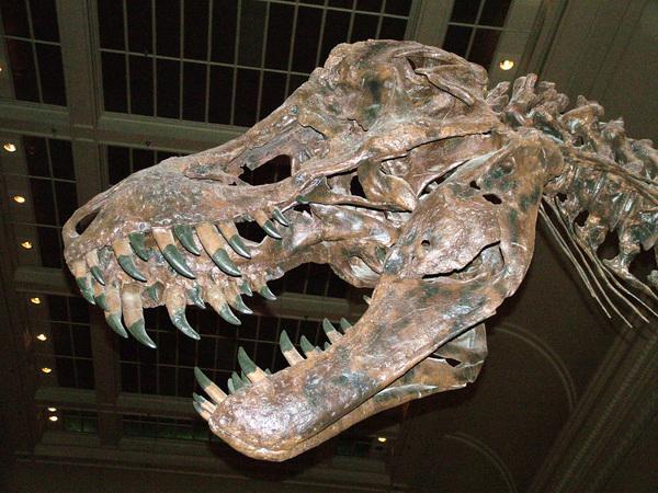 Die tirannosourus rex vertel ons dat die dier baie, baie groot was