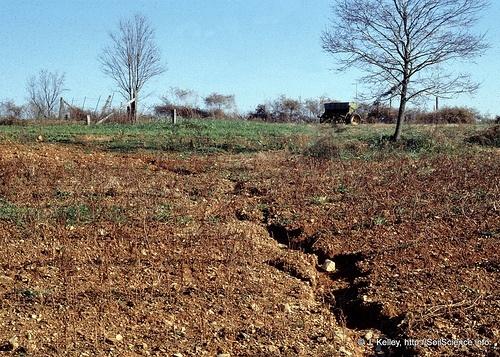 Thunderbolt kids for Living things found in soil