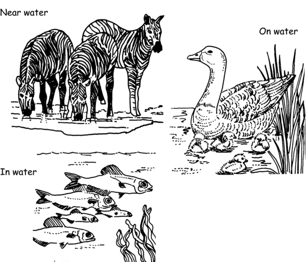 Image Result For Tropical Animals Coloring